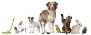 Mutuelle santé animaux Martinique